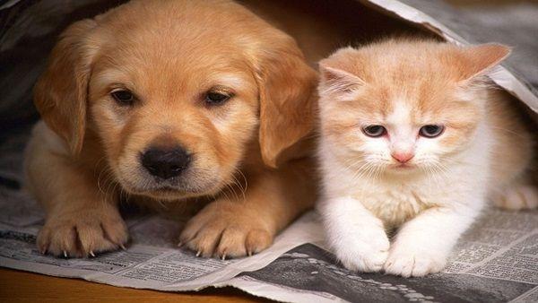 Los perros y gatos no pueden contagiar a las personas de coronavirus.