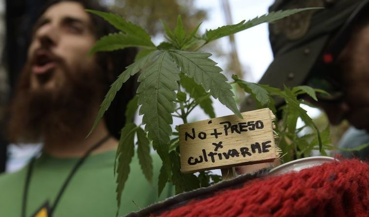 En Argentina legalizan el autocultivo de marihuana. En Paraguay el proyecto de ley pasó a Diputados.