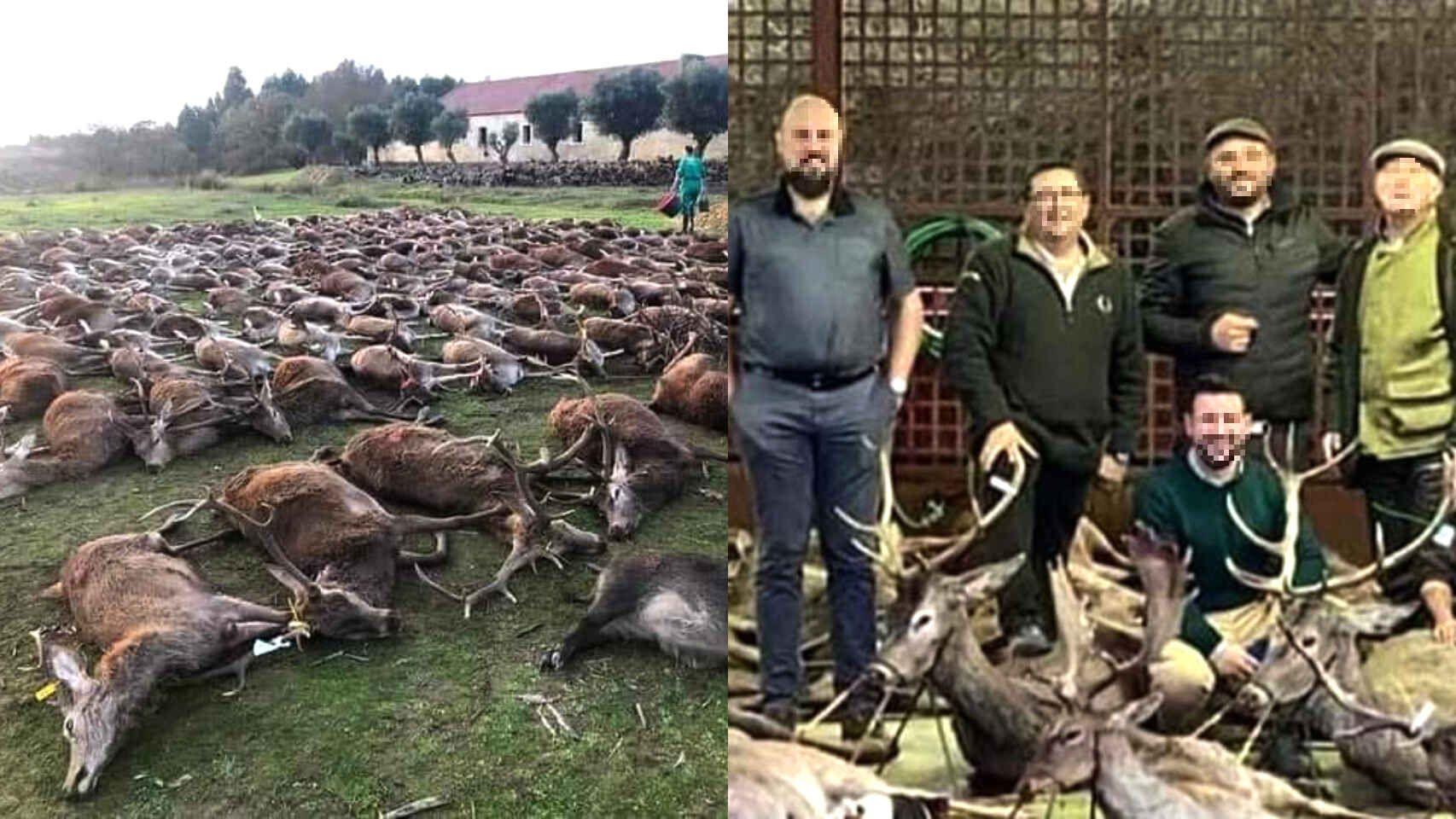 Los cazadores despertaron la indignación colectiva por la muerte de jabalíes y venados.